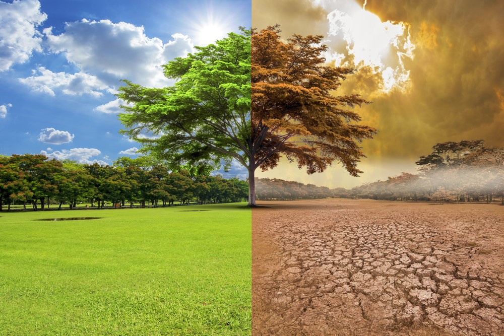 Cómo afectará el cambio climático al cultivo del olivo en el Mediterráneo