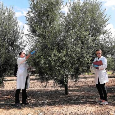 La innovación en el olivar ayuda a fijar población